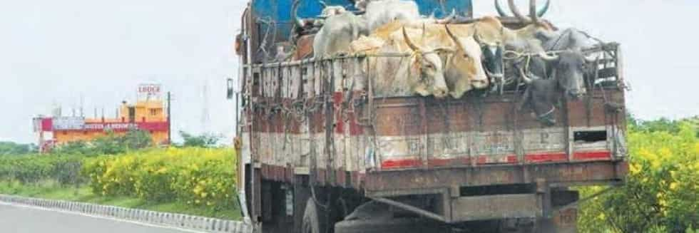 Gurugram Truck Driver thrashed with hammers and rods for transporting beef; FIR registered