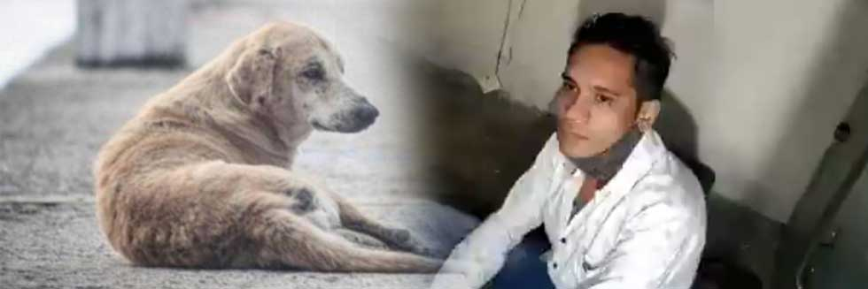 25-Year Old Man Held for Throwing Street Dog Into Bhopal Lake After Video Went Viral