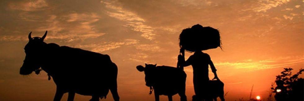 Supreme Court Rejected Plea Seeking Enforcement of New Farm Laws