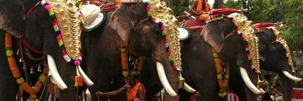Consider to Prohibit Private Ownership of Elephants by Temples, Individuals: Madras High Court